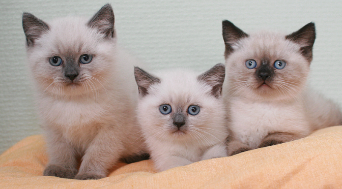 Kattungar sålda