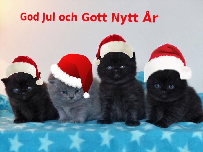 Nya kullen önskar God Jul och Gott Nytt År