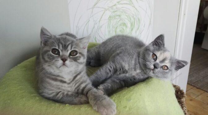 Kattungarna är 10 veckor